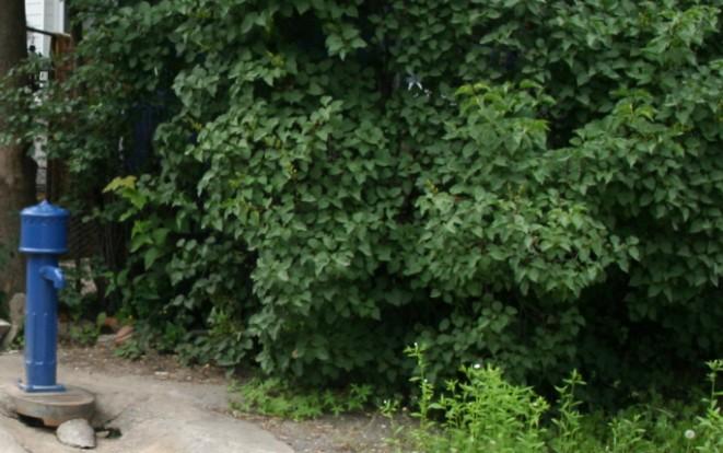 žydrieji Vilnaius hidrantai