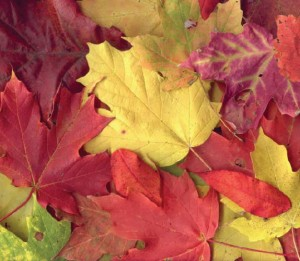 lapai rudenį