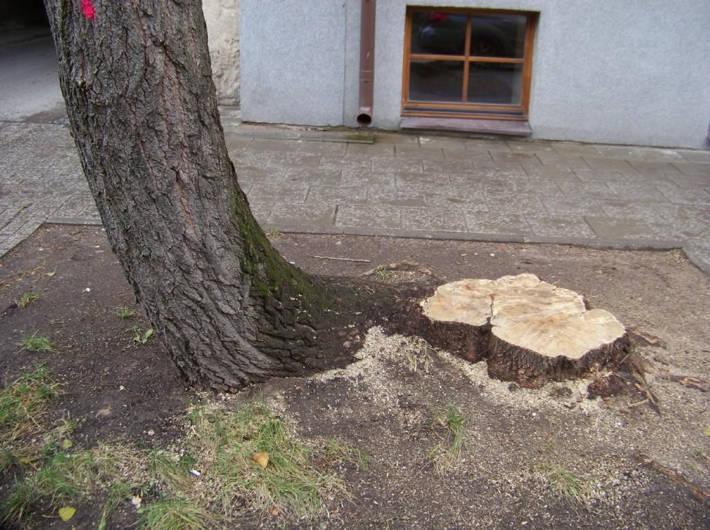 iškirsti medžiai Vilniuje