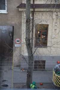 Medis A. Vivulskio gatvėje prieš jį kertant