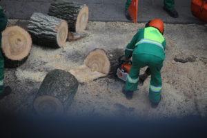 Medžio A. Vivulskio gatvėje liekanų pjaustymas jį nukirtus