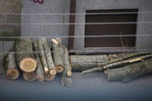 Medžio A. Vivulskio gatvėje liekanos